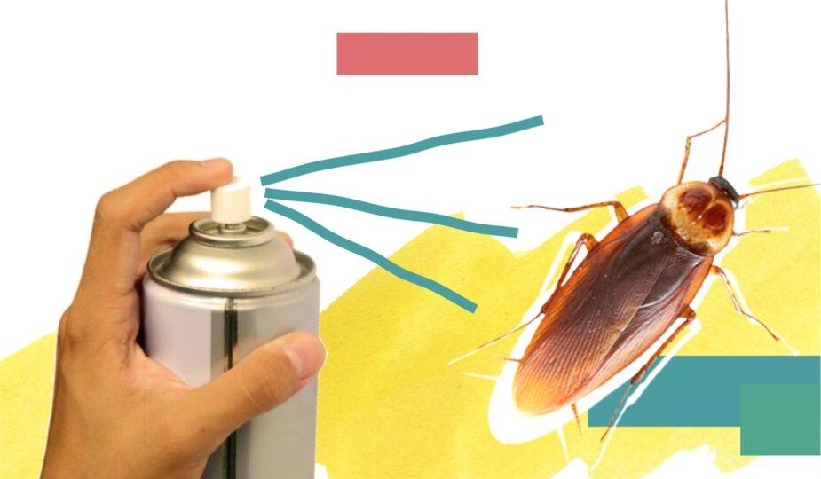 Что делать если в доме завелись клопы или тараканы