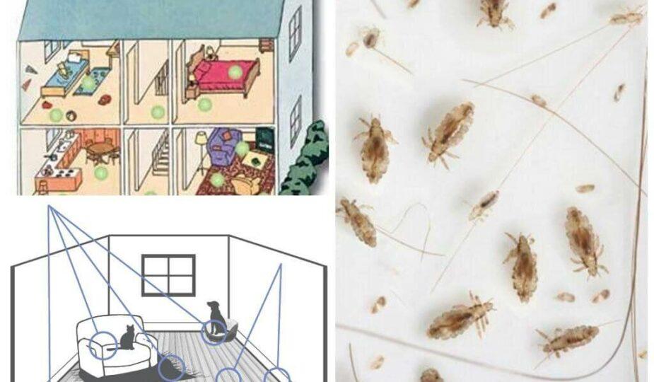 Как избавиться от блох в доме