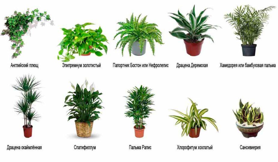 Самые полезные для здоровья комнатные растения